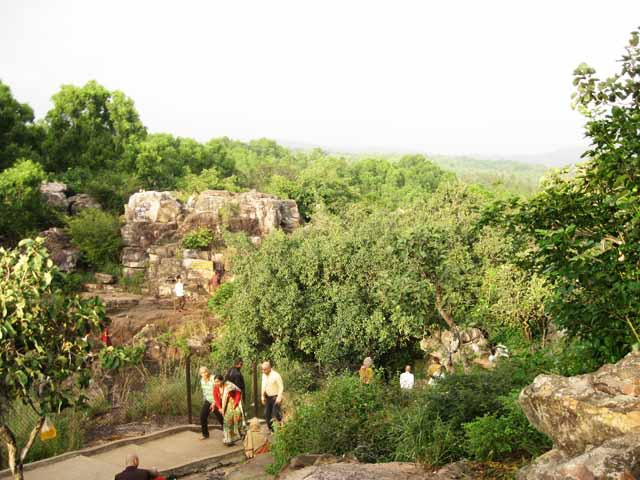 Lush Jungle Tirumala