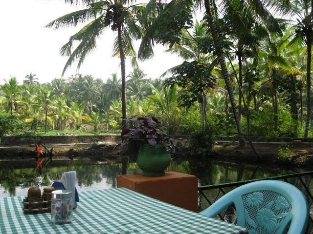 Palm tree cafe